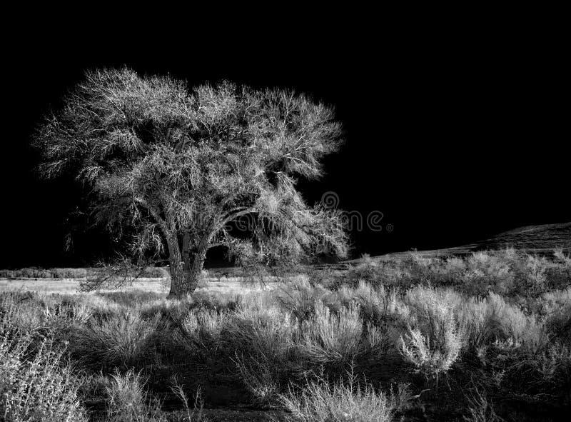 Призрачное дерево стоковое фото