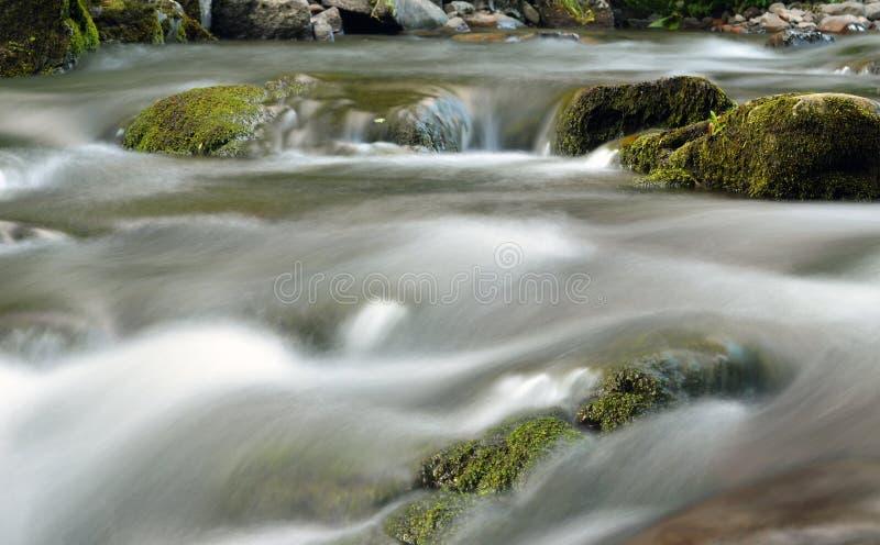 Прикарпатская природа стоковое фото