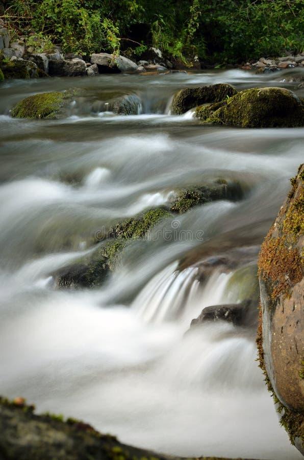 Прикарпатская природа стоковая фотография