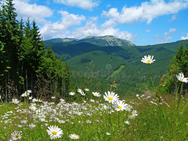 Прикарпатские горы в лете, Украина стоковые фотографии rf