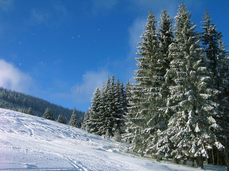 прикарпатские горы Украина стоковое изображение