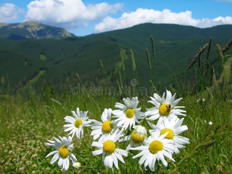 прикарпатские горы стоковая фотография