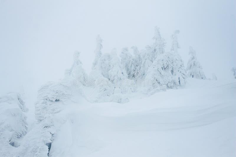 Прикарпатские горы Gorgany снежные стоковая фотография rf