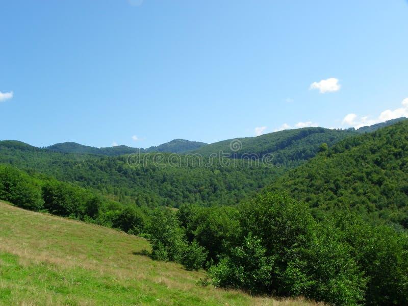 прикарпатский взгляд сверху гор стоковые фотографии rf