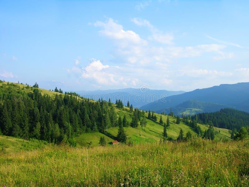 прикарпатское лето Украина гор стоковое изображение rf