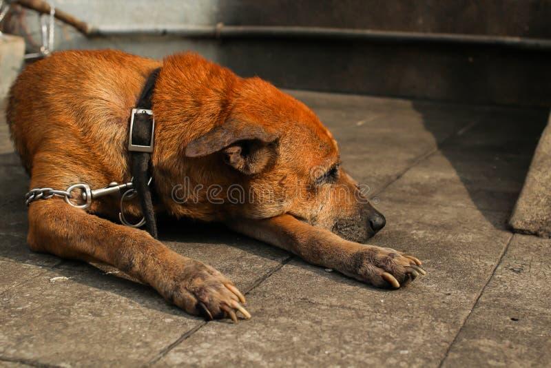 Прикованный вверх по собаке стоковое фото rf