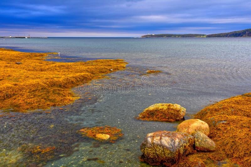 Прилив вне, скалистая гавань, Ньюфаундленд стоковое изображение rf