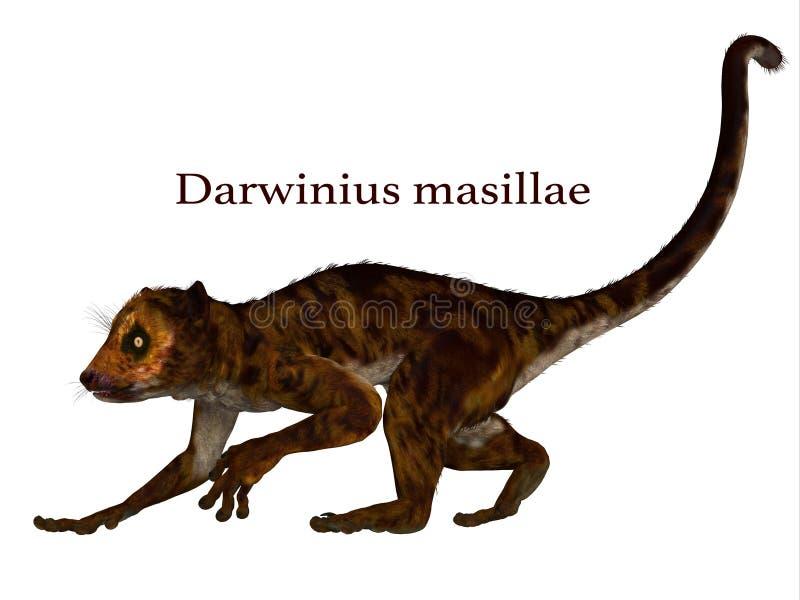 Примат Darwinius с шрифтом иллюстрация штока