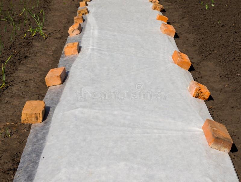 Применение материала заволакивания на землистой кровати защитить саженцы стоковое фото rf