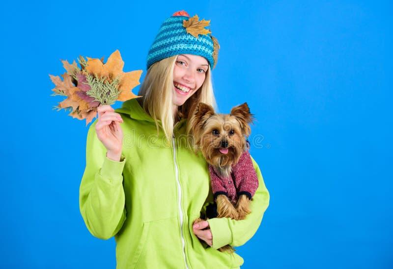 Примите осень любимца заботы Концепция ветеринарной медицины Здравоохранение для любимца собаки Подсказки здоровья любимца на осе стоковое фото rf