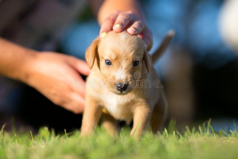 Примите собаку - малый желтый цвет принятый любимчик стоковая фотография rf