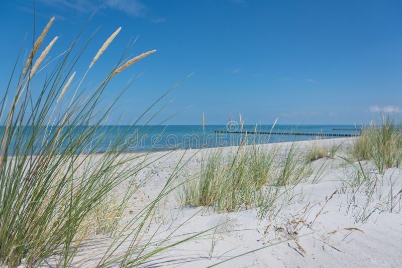 приморская идиллия, на пляже летом стоковое изображение rf