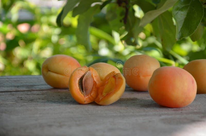 принадлежности Зрелые органические абрикосы с листьями на белом деревянном столе над зеленой природой запачкали предпосылку сад стоковое изображение