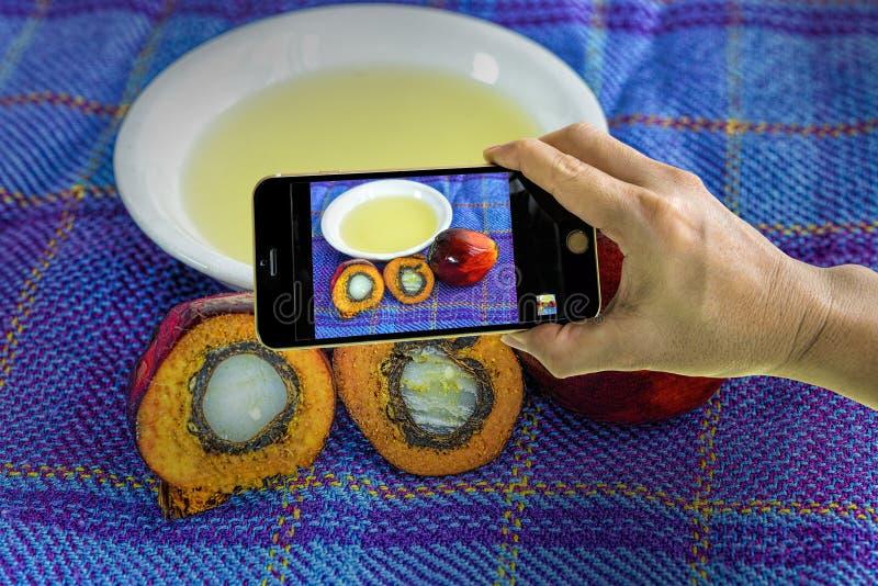 Принимать фото свежих плодов пальмового масла с мобильным телефоном стоковые изображения rf