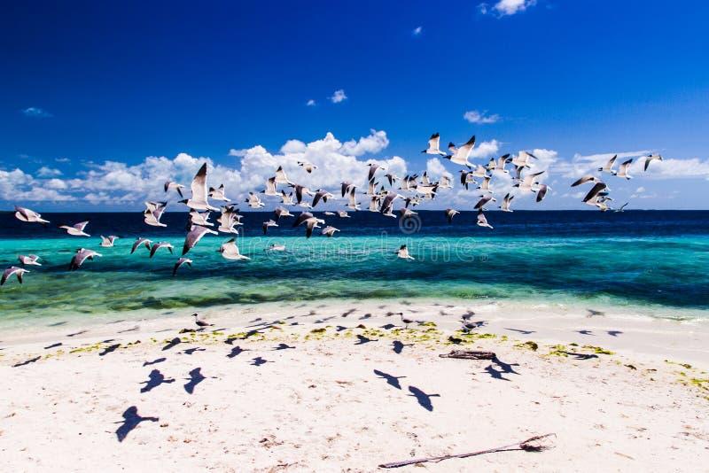 принятая солнечность чайок Квинсленда mooloolaba летания свободного полета Австралии стоковое фото