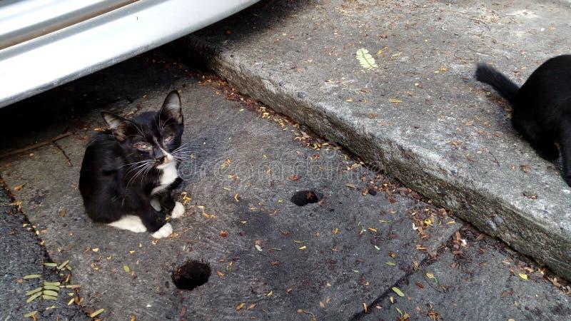 принятая улица фото кота бездомная стоковая фотография