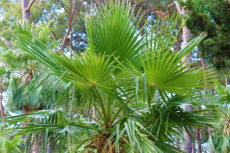 принятое солнечное ладони листьев дня ладонь листьев тропическая красивейшая пальма листьев стоковое фото
