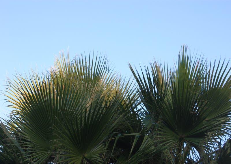 принятое солнечное ладони листьев дня стоковое фото rf
