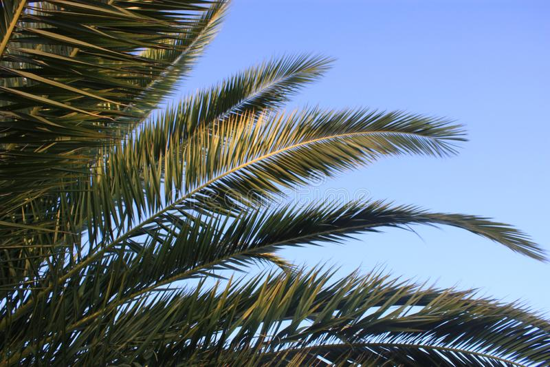 принятое солнечное ладони листьев дня стоковые фотографии rf