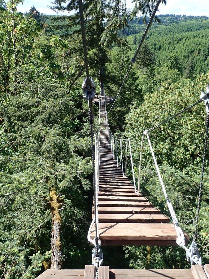 Приостанавливанный мост веревочки стоковые фото