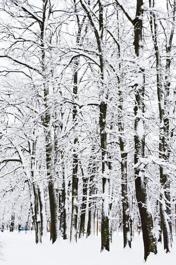 припаркуйте зиму стоковое изображение