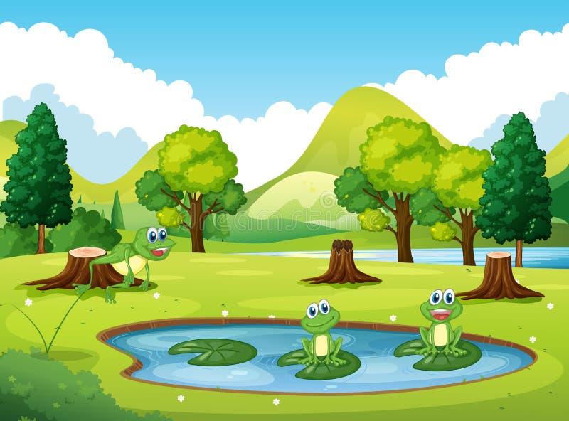 Припаркуйте сцену с 3 лягушками в пруде иллюстрация штока