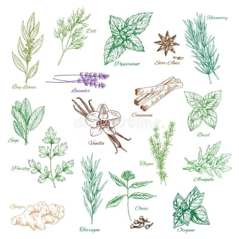 Приправы специи значков вектора или flavorings травы бесплатная иллюстрация