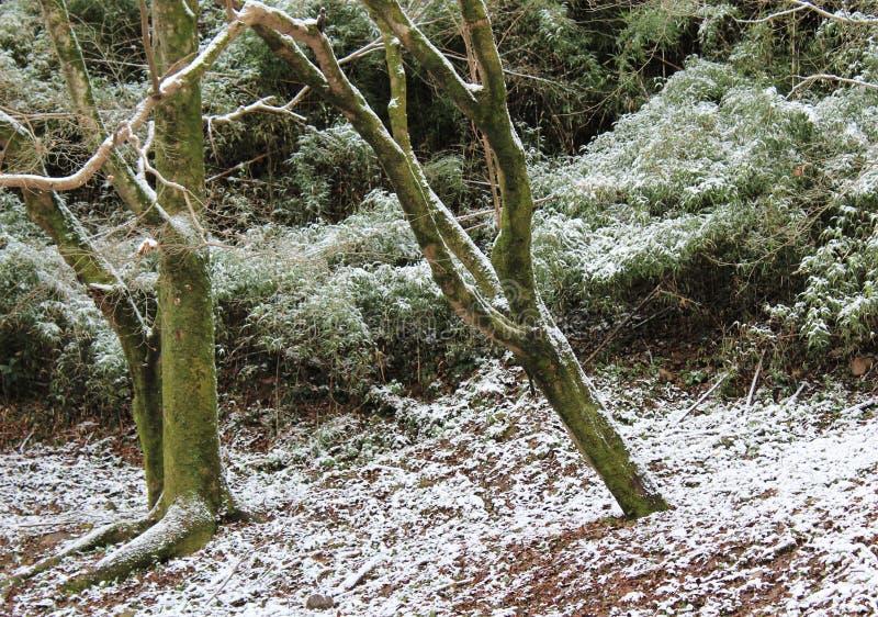 Припудривание снега на поле леса стоковое фото rf