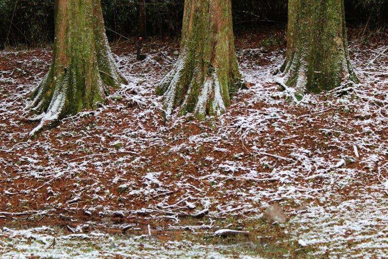 Припудривание снега на поле леса стоковое изображение