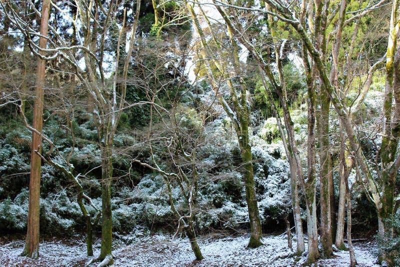 Припудривание снега на поле леса стоковая фотография