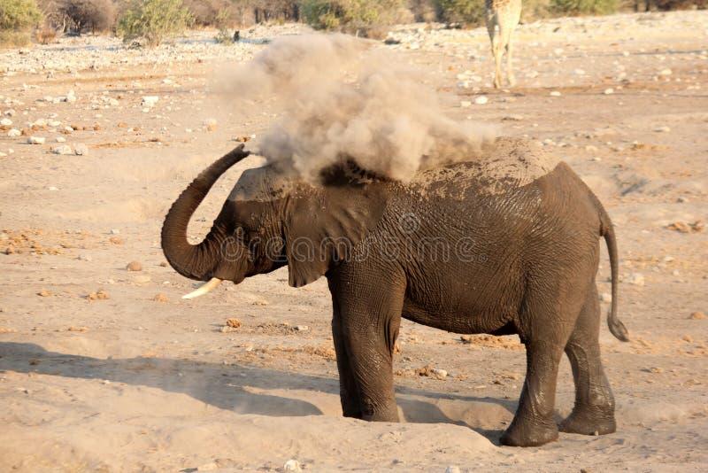 Припудривание слона стоковые фотографии rf
