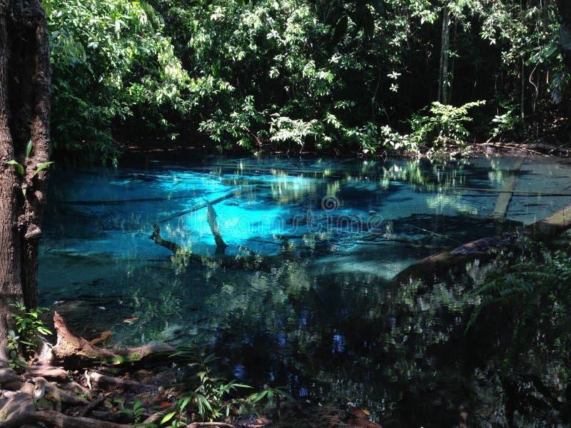 Природа бассейна голубого зеленого цвета красивая стоковые изображения