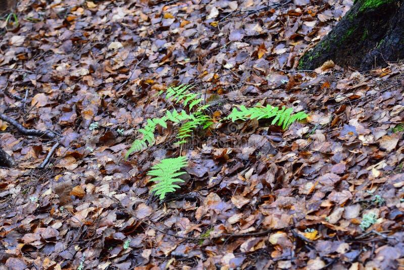 Природа будит последнюю теплую осень стоковые фото
