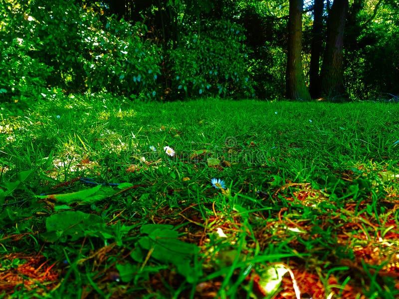 Природа вполне жизни к wormth солнца стоковое изображение