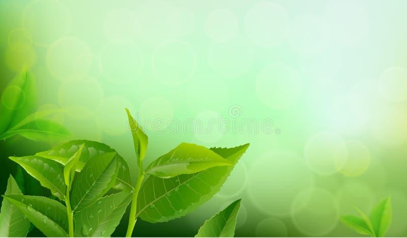 Природа выходит зеленый чай на предпосылку весны иллюстрация вектора