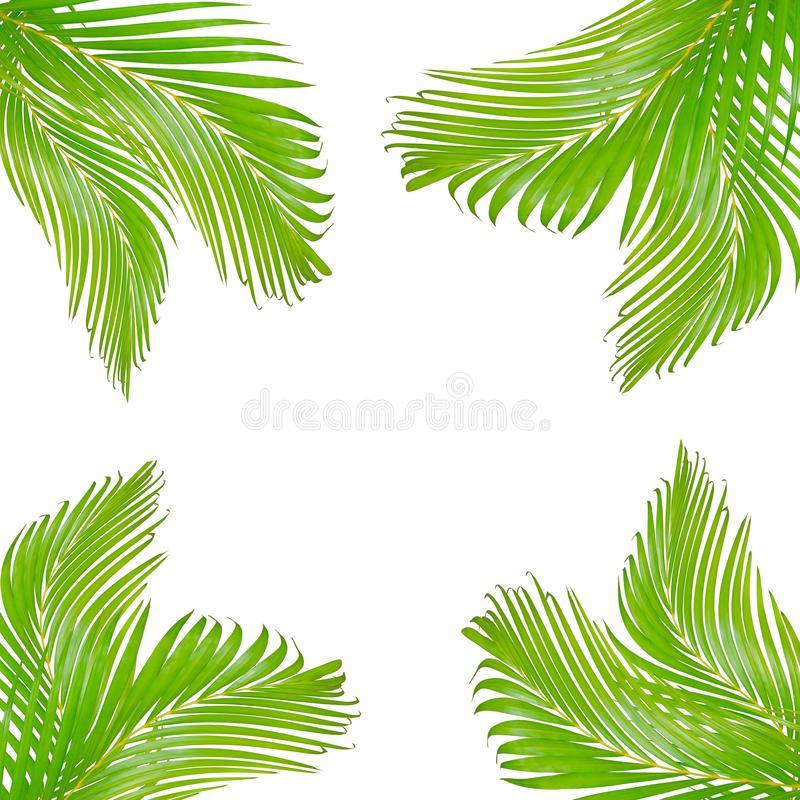 природа выходит рамка для текста сделанного из зеленых изолированных лист ладони стоковая фотография rf