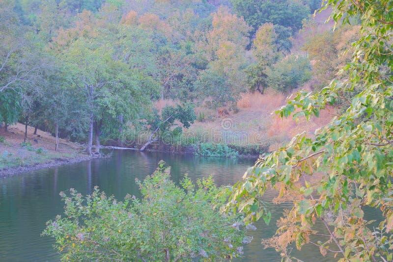 Природа в лесе, воде mahi задней, banswara, Раджастхане, Индии стоковое изображение