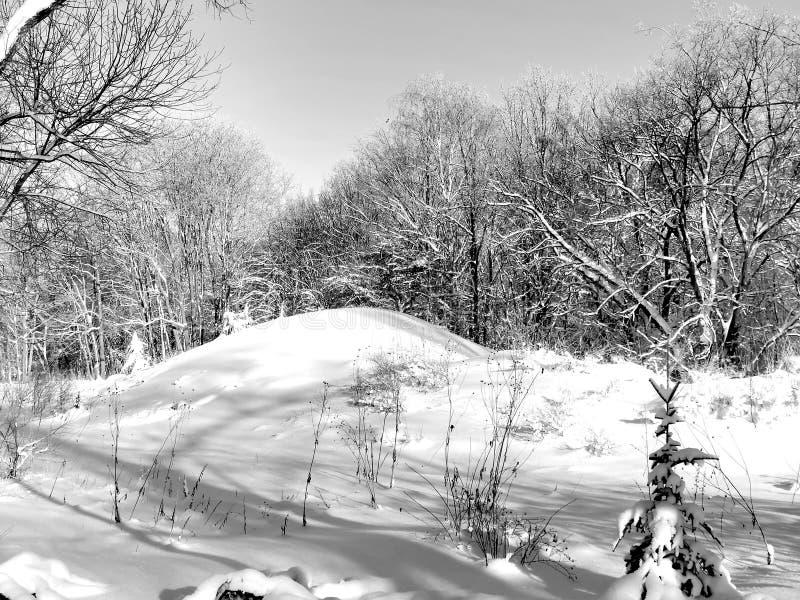 Природа в лесе в зиме на черно-белом изображении стоковая фотография