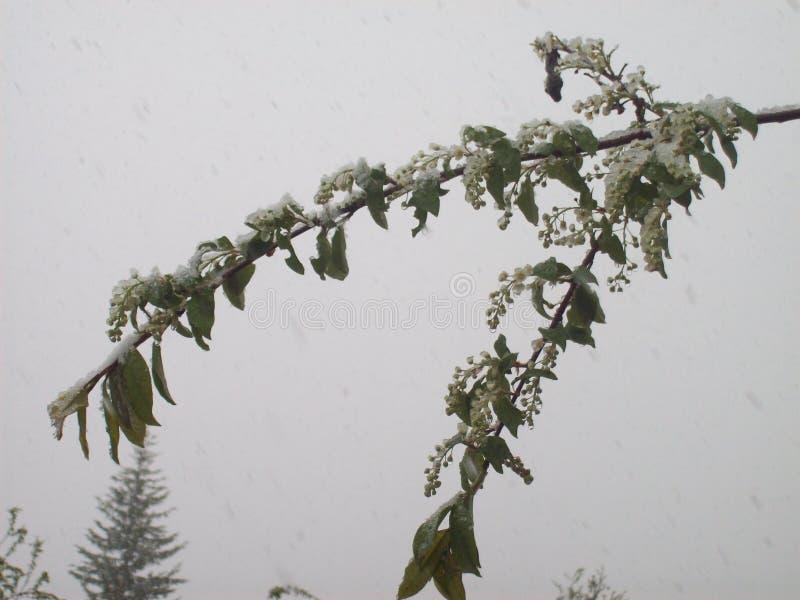 Природа в области Иркутска стоковое изображение