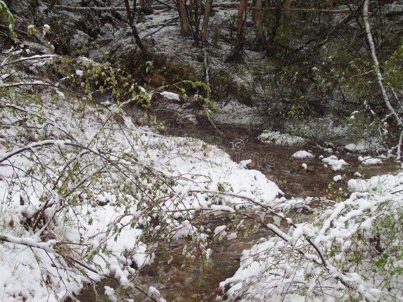 Природа в области Иркутска стоковое фото rf