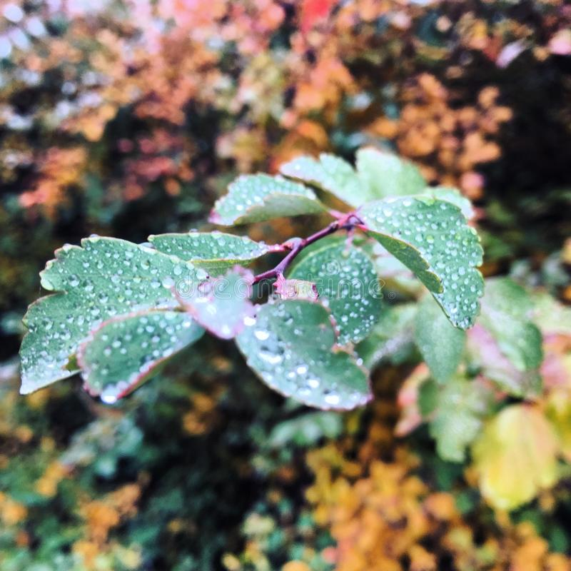 Природа в саде Полтаве стоковое изображение