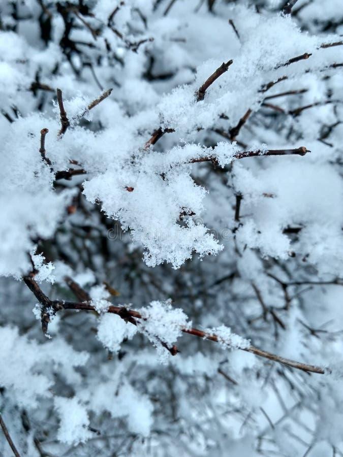 Природа в снеге стоковое изображение rf