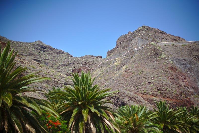 Природа, горы, острова, камни и кусты, ладони, заводы под убийственным солнцем, красная гора, национальный парк Teide, Испания, стоковая фотография