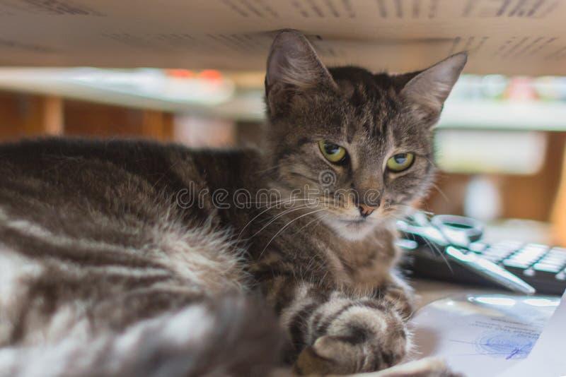 Природа домашней кошки стоковое изображение
