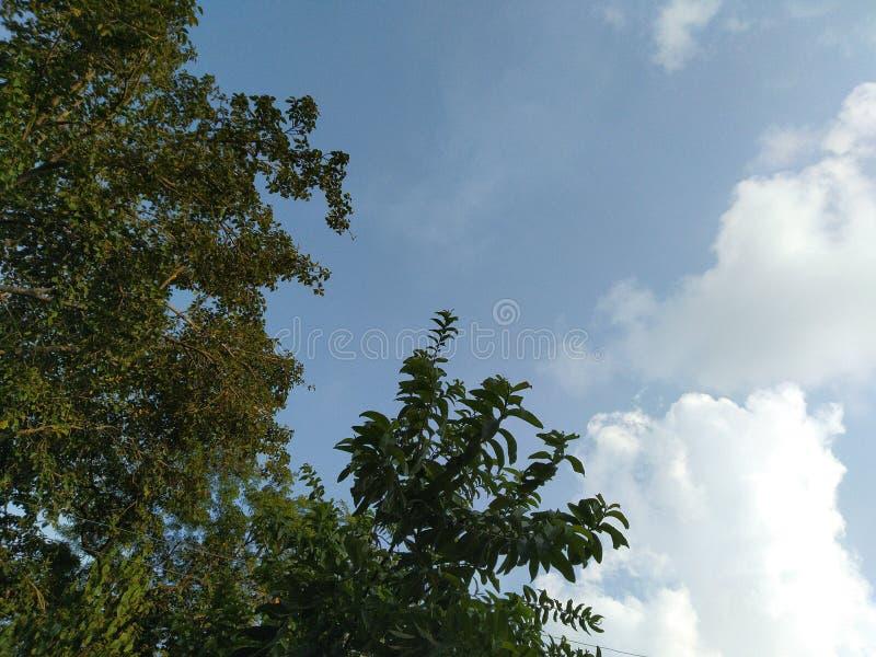 Природа заводов деревьев голубого неба и пасмурной погоды красивая стоковое фото rf