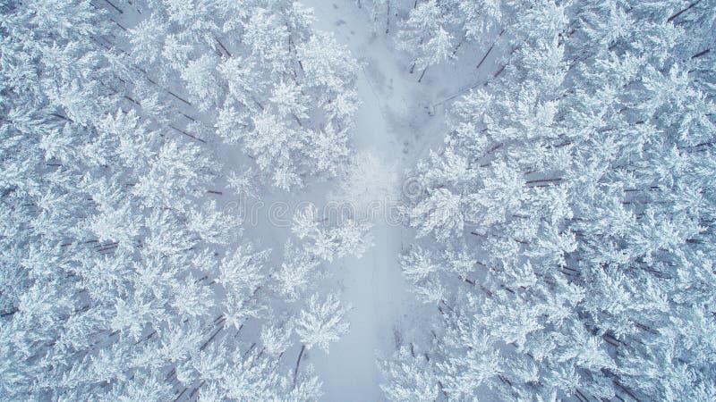 Природа зимы Snowy стоковая фотография rf