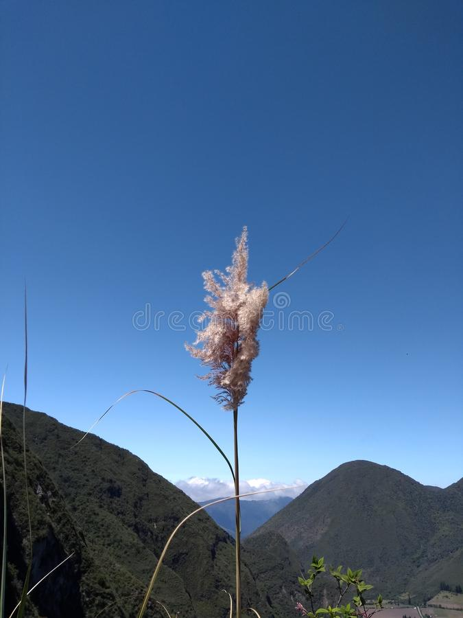 Природа и гора стоковая фотография rf