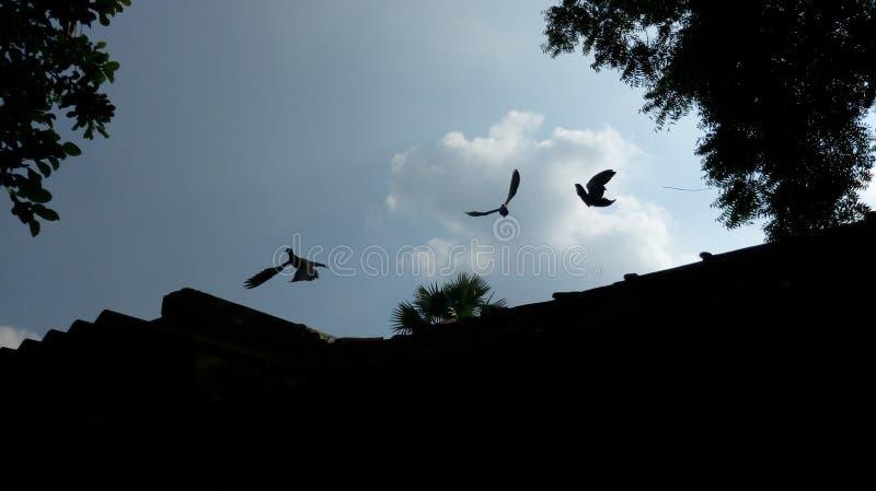 природа и летящие птицы неба дневного света стоковые изображения
