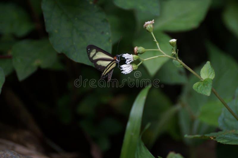 Природа красива, бабочки летает стоковые изображения rf