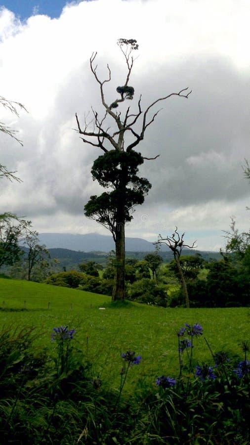 Природа красива и внушительна стоковые фото